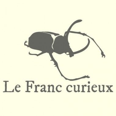 Lucanus fryi - mâle - 63mm